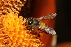 wild-honey-bees-1432378-7-m