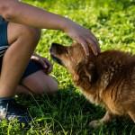 Warto inwestować w kosze na psie kupy