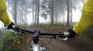kierownica-roweru-w-lesie